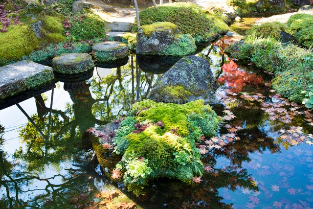 洗心庵の秋の写真素材 [FYI03115789]