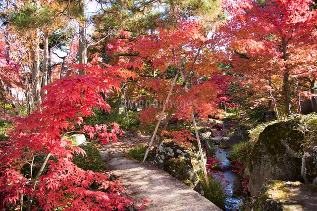 洗心庵の秋の写真素材 [FYI03115791]