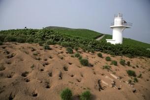 天売島のウトウの巣穴の写真素材 [FYI03116012]