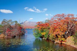 紅葉の大沼公園と駒ケ岳の写真素材 [FYI03116121]