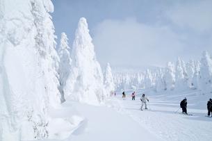山形蔵王の樹氷の写真素材 [FYI03116190]