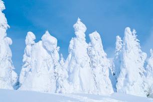 山形蔵王の樹氷の写真素材 [FYI03116210]