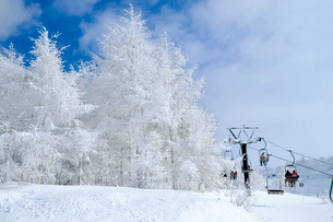 山形蔵王の樹氷の写真素材 [FYI03116220]