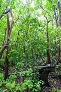 小笠原母島のジャングルに今も佇む旧日本軍の高角砲の写真素材 [FYI03116261]