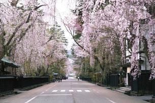 桜咲く角館武家屋敷の写真素材 [FYI03116296]
