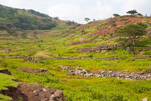 野崎島 段々畑の跡の写真素材 [FYI03116636]
