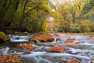 紅葉映える菊池川の写真素材 [FYI03116656]