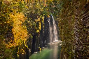 黄葉映える真名井の滝の写真素材 [FYI03116675]