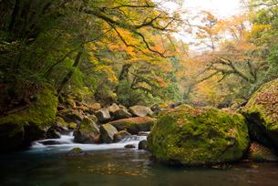 紅葉映える菊池川の写真素材 [FYI03116692]