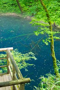 白神山地に点在する十二湖の青池の写真素材 [FYI03116772]