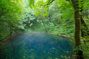 白神山地に点在する十二湖の青池の写真素材 [FYI03116776]