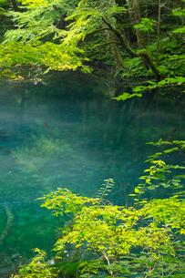 白神山地に点在する十二湖の沸壺の池の写真素材 [FYI03116792]