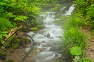 白神山地に点在する十二湖の沸壺池の清水の写真素材 [FYI03116793]