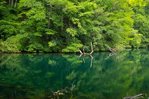 白神山地に点在する十二湖の落口の池の写真素材 [FYI03116802]