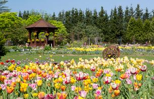 様々な花々が咲き誇る紫竹ガーデンの写真素材 [FYI03117001]