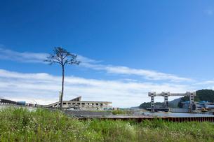 高田松原跡地に立つ奇跡の一本松の写真素材 [FYI03117014]