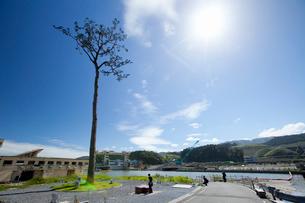 高田松原跡地に立つ奇跡の一本松の写真素材 [FYI03117020]