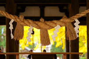 新宮熊野神社の写真素材 [FYI03117868]