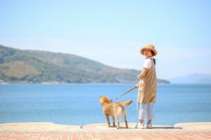 海岸で柴犬と散歩の写真素材 [FYI03118570]