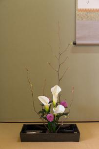 京都「和文化体験」の写真素材 [FYI03118625]
