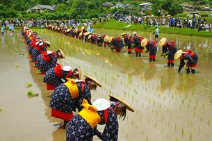 御田祭の写真素材 [FYI03118676]