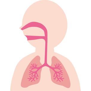 人体気管肺のイラスト素材 [FYI03118899]