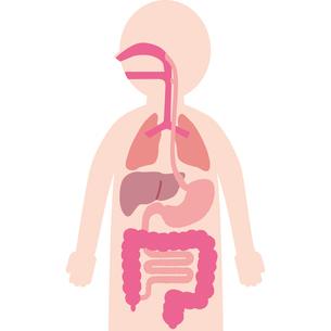 人体と内臓のイラスト素材 [FYI03118904]