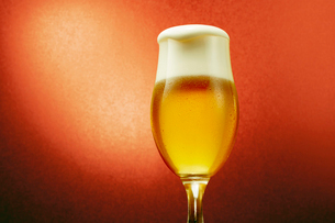 赤色背景のグラスのビールの写真素材 [FYI03119546]