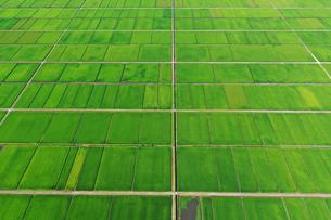 新潟県の田園風景の写真素材 [FYI03119644]