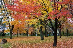 秋の公園の写真素材 [FYI03119715]