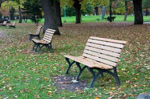 秋の公園のベンチの写真素材 [FYI03119718]