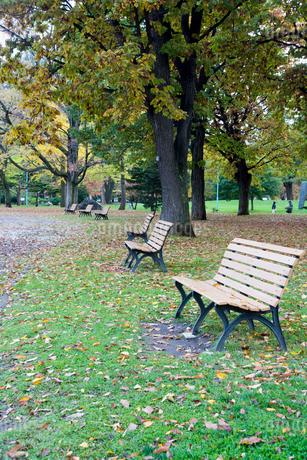 秋の公園のベンチの写真素材 [FYI03119719]