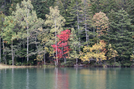湖面に写る赤いモミジの写真素材 [FYI03119736]