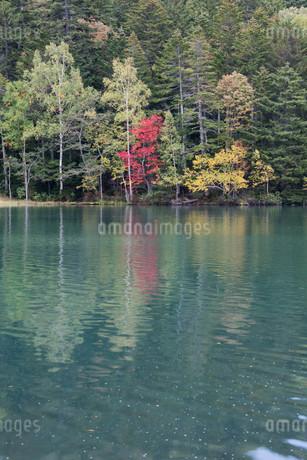 湖面に写る赤いモミジの写真素材 [FYI03119737]