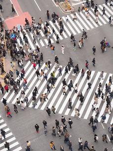 渋谷スクランブル交差点の写真素材 [FYI03119779]