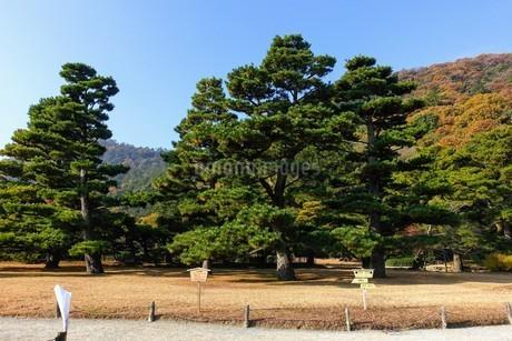 お手植え松 栗林公園の写真素材 [FYI03119845]