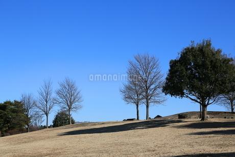 冬枯れの草地の丘の写真素材 [FYI03120345]