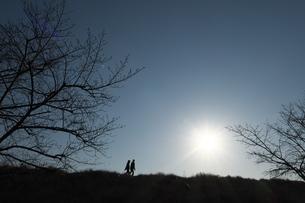 冬枯れの道を歩く人(シルエット)の写真素材 [FYI03120346]