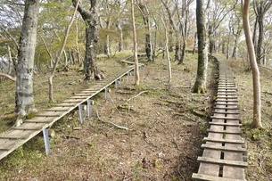 植生保護の木道の写真素材 [FYI03120389]