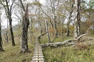 植生保護の木道の写真素材 [FYI03120391]