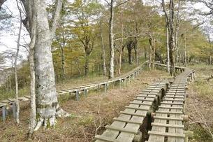 植生保護の木道の写真素材 [FYI03120393]