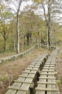 植生保護の木道の写真素材 [FYI03120394]