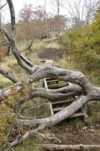 山道を塞ぐ倒木の写真素材 [FYI03120397]