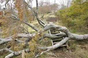 山道を塞ぐ倒木の写真素材 [FYI03120398]