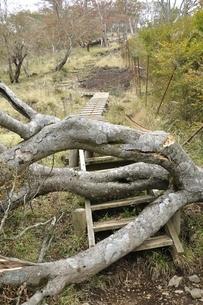 山道を塞ぐ倒木の写真素材 [FYI03120399]