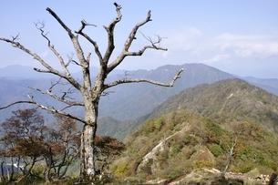 檜洞丸の枯木の写真素材 [FYI03120408]