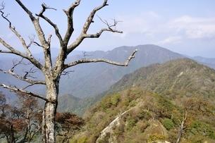 檜洞丸の枯木の写真素材 [FYI03120409]
