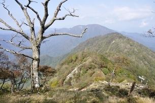 檜洞丸の枯木の写真素材 [FYI03120410]
