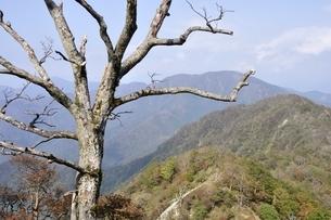 檜洞丸の枯木の写真素材 [FYI03120412]