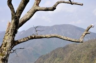 檜洞丸の枯木の写真素材 [FYI03120415]